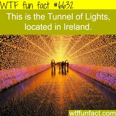 tunnel of lights ireland wtf fun facts WTF Facts : funny, interesting & weird facts — The Tunnel of Lights, Ireland - WTF fun factsWTF Facts : funny, interesting & weird facts — The Tunnel of Lights, Ireland - WTF fun facts Oh The Places You'll Go, Cool Places To Visit, Places To Travel, Travel Destinations, Dream Vacations, Vacation Spots, Vacation Places, Wtf Fun Facts, Crazy Facts