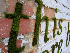 Graffiti with moss. Put couple of pieces of moss, half a liter of Yoghurt and half a teaspoon of sugar in a blender. Blend it and apply with brush on a wall. Keep it most in the following week with water (plant spray) and it will grow.