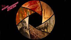 Concurso de fotografía. 50º edición Wildlife Photographer of the Year. Abierto hasta el 27 de Febrero 2014