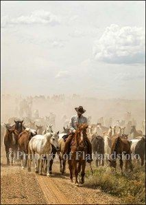 Cowboy Country - title The Road Home Cowboy Up, Cowboy Horse, Cowboy Gear, Western Riding, Western Art, Horse Riding, Trail Riding, Westerns, Voyage Usa