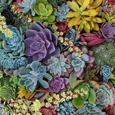 """""""This color palette is absolutely breathtaking! Cactus Planta, Cactus Y Suculentas, Colorful Succulents, Planting Succulents, Echeveria, Succulent Wall, Succulent Plants, Succulent Ideas, Terrarium Plants"""