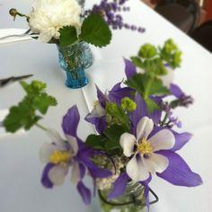 rocky mountain flowers wedding native plant