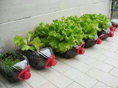 Water bottle planters