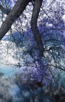 Blue Tree Touching Water Surface by HaleyGottardo