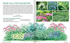 White Flower Farms:Shade garden - Inspired my front garden. Love It!
