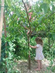 Edible and sensory gardens for kids – Natural Playground İdeas Planting For Kids, Sensory Garden, Environmental Design, Garden Spaces, Outdoor Fun, Permaculture, Vegetable Garden, Gardening Tips, Outdoor Gardens