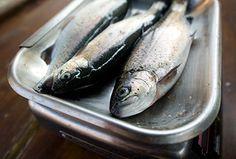 Die haben gerade noch gelebt: Flussfische von Stefan Sigg auf dem Münstermarkt.