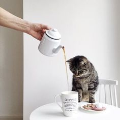 morning kitty | tag your coffee friend below 👇 use #yourcoffeeguru to be featured 📷 by @uyesurana .....#coffee #coffeetime #coffeebreak #coffeelover #cafe #l4l #cafes #coffeegram #cafelover #coffeeaccount #followformore #caffine #espresso #latte #latteart #cat #cats