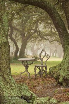 rustic and enchanting table and chair made from gnarled wood - beautiful misty woodland backdrop too
