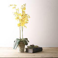 45 gbp Faux Flowers & Plants | Product categories | Flower Studio Shop Fake Plants, Little Plants, Artificial Plants, Bunch Of Flowers, Faux Flowers, Bloom And Wild, Lily Garden, Faux Flower Arrangements, Flower Studio