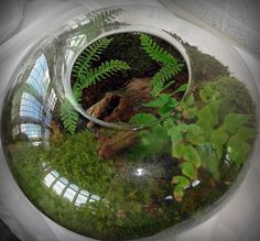 forest floor terrarium with ferns and moss