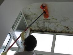 remover mofo de paredes