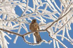 Dit plaatje heeft een centrale compositie omdat het vogeltje zich in het midden bevind. Alles gaat om dit vogeltje, je ziet ook dat alles heel erg bevroren is en het stukje waar het vogeltje zit is minder bevroren! Dit lokt de aandacht er naar toe. Ook de andere kleur. Alles is wit en lichtblauw alleen het vogeltje is dan helemaal bruin en sommige kleine stukjes die je door de sneeuw heen ziet.