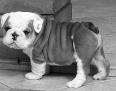 Sweet Pup...