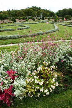 Gaura, Helichrysum & Begonia in the formal garden of Chenonceau