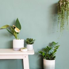 7 home decor styling tips to elevate your indoor plant game.