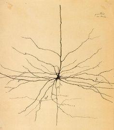 Pyramidal Neuron, drawn by Santiago Ramón y Cajal (1852-1934)