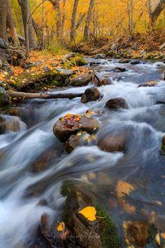 Fall! (McGee Creek, Eastern Sierra, California) by Liping Yu on 500px