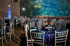 Aquarium wedding reception in Florida