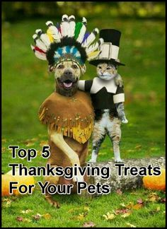 Top 5 Thanksgiving Treats For Your Pet  ... from PetsLady.com ... The FUN site for Animal Lovers