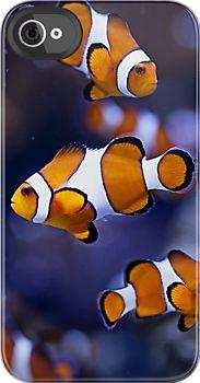 love clown-fish