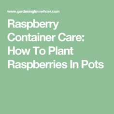 Raspberry Container Care: How To Plant Raspberries In Pots