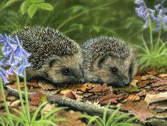 Wildlife Paintings by British-Wildlife Artist Nigel Artingstall Wildlife Paintings, Wildlife Art, Woodland Creatures, Woodland Animals, Beautiful Creatures, Animals Beautiful, Baby Animals, Cute Animals, Hedgehog Pet