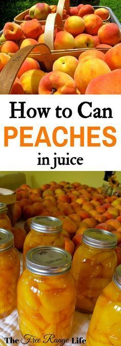 Canning Peaches in Juice- No Sugar Added! Preserve peaches at home! Learn how to can peaches in juice to preserve them all year long! Preserve peaches at home! Learn how to can peaches in juice to preserve them all year long! Canning Food Preservation, Preserving Food, Preserving Peaches, Canning Peaches, Canning Apples, Canning Vegetables, Canning Tomatoes, Canned Food Storage, Canning Tips