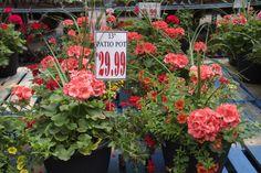 Patio, Plants, Products, Terrace, Flora, Plant, Gadget