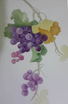 Grapes  by Miriam Kuperstein