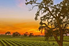 """""""Why do I do what I do or go where I go or stay where I stay?""""  """"California is a garden of Eden a paradise to live in or see """"But believe it or not you won't find it so hot If you ain't got the do re mi."""" Woody Guthrie. Good Morning from Wine Country.   #all_my_own #artsyheaven #allwhatsbeautiful #AmazingPhotoHunter #bellashots #best_skyshots #bestnatureshot #caliexplored #dream_image #discoveramerica #ebs_fullframe #exploretocreate #fotofanatics_sky_ #Ig_brillant #ig_captures…"""