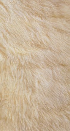 #fur #wallpaper