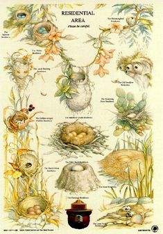 Types of Nests - Smoky Bear poster from the U. Forestry Service Bird activity, Apologia Flying Creatures {pic only! Bird Identification, Smokey The Bears, Nature Journal, Backyard Birds, Fauna, Wild Birds, Bird Watching, Science And Nature, Botanical Illustration