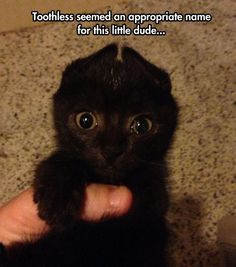 Omg before I even seen the words I was like his name should be toothless lol Dump A Day Funny Pictures Of The Day - 72 Pics Cute Funny Animals, Funny Animal Pictures, Cute Baby Animals, Funny Cute, Cute Cats, Cute Pictures, Hilarious, Crazy Cat Lady, Crazy Cats