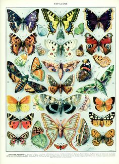 1936 Butterfly vintage poster Antique by FrenchVintagePrints