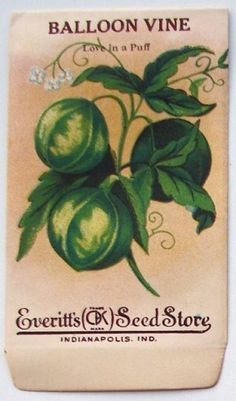 EVERITT'S SEED STORE,  Balloon Vine 59, Vintage Seed Packet