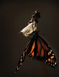 Why Understanding What Trauma Does to the Brain Helps You Heal - Life Care Wellness Butterfly Wallpaper Iphone, Veuve, Life Care, Breath In Breath Out, Life Happens, Be Kind To Yourself, Beautiful Love, Absolutely Stunning, Daily Devotional