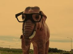 if i ever own an elephant, im naming her effie.  or earl.