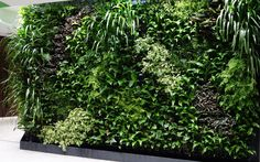 best indoor green wall - Google Search