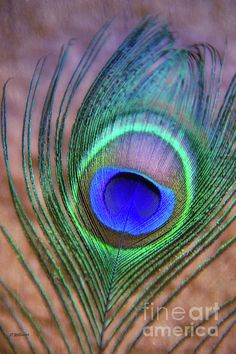 """""""Eye of the Peacock"""" by Pamela Williams as featured on Fine Art America Peacock Feather Tattoo, Feather Tattoo Design, Owl Tattoo Design, Feather Art, Feather Tattoos, Peacock Feathers, Bird Tattoos, Tattoo Designs, Peacock Painting"""