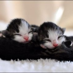 twin kitties. one for you and one or me ♥︎
