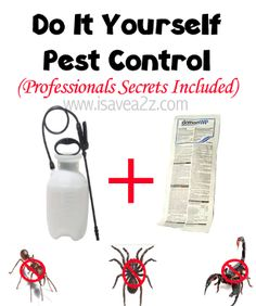 BEST REMEDY for Ants, Scorpions and spiders!!! This stuff really works!!! I HATE BUGS!!! Home made pest control