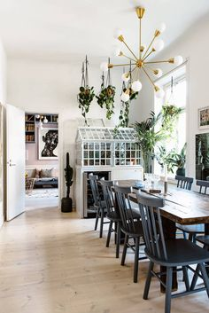 my scandinavian home: an indoor greenhouse in the kitchen / dining room of Karolina Modig's Stockholm home.