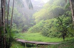 La Guyane : Un bout de France en Amazonie