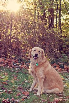 April 10 Challenge: My Fave Part of the Day. Lovin' the photographer's Golden Hour. Yeah, love my golden, too. My heart dog. #fmsphotoaday