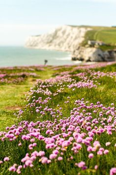 Isle of Wight, South England.