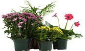 Clean Air Houseplants! Research by NASA found that many houseplants are capable of reducing harmful toxins in the air, such as: benzene, formaldehyde, trichloroethylene (TCE), toluene, and more.    Read more: http://www.care2.com/greenliving/10-houseplants-that-clean-the-air.html#ixzz1rHKKMtnC