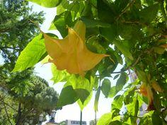 Flor amarilla tropical