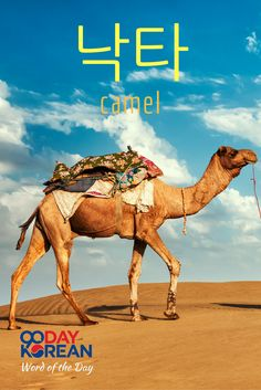 Can you use 낙타 (camel) in a sentence? Write your sentence in the comments below!