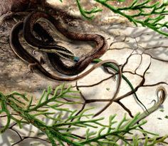 Snakes used to have four legs, according to a roughly 120-million-year-old fossil from northeastern Brazil.